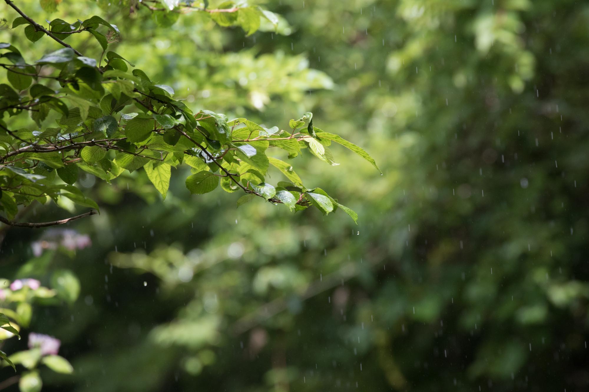 20170718-雨模様2