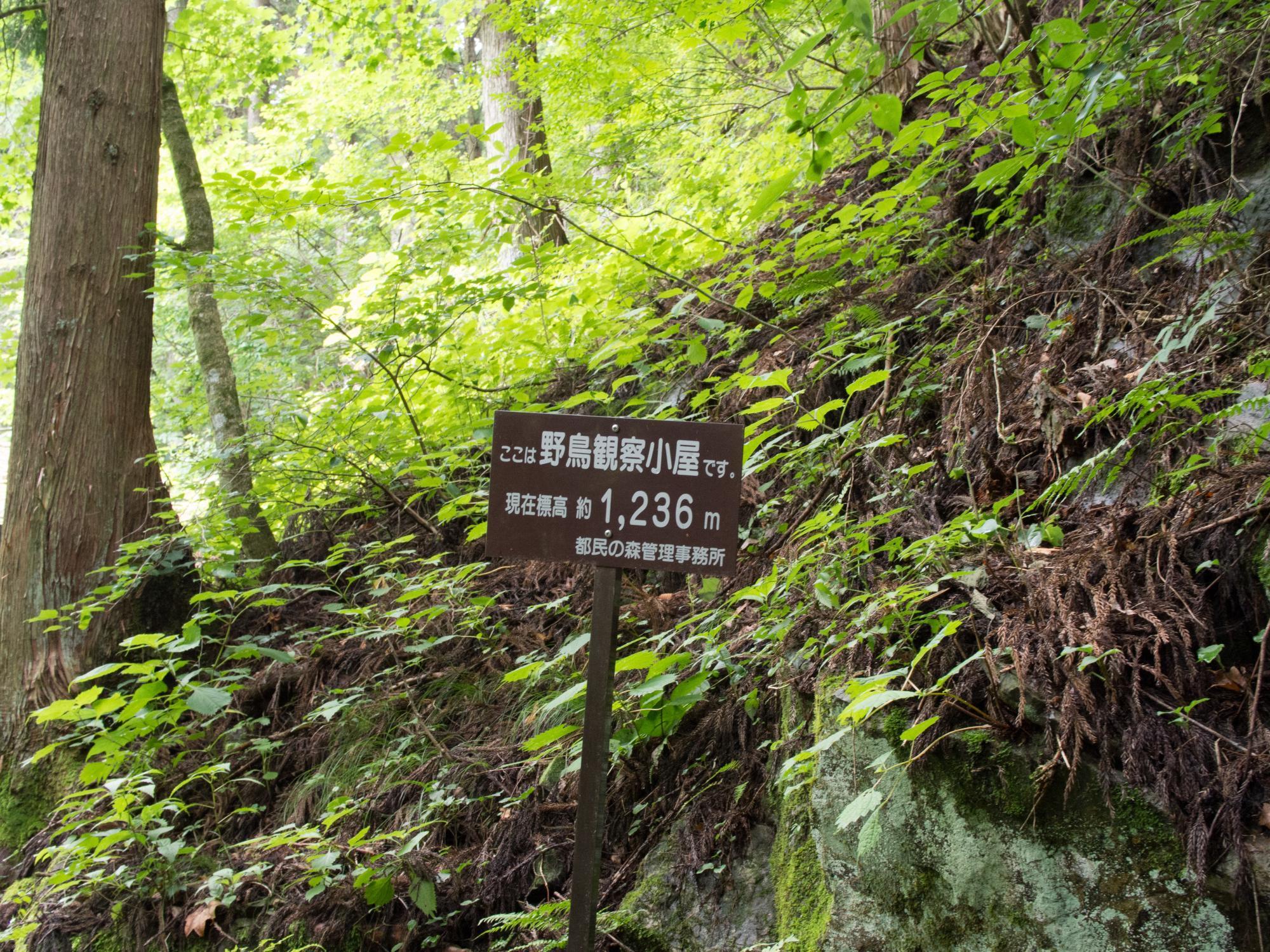 20150721-野鳥観察小屋