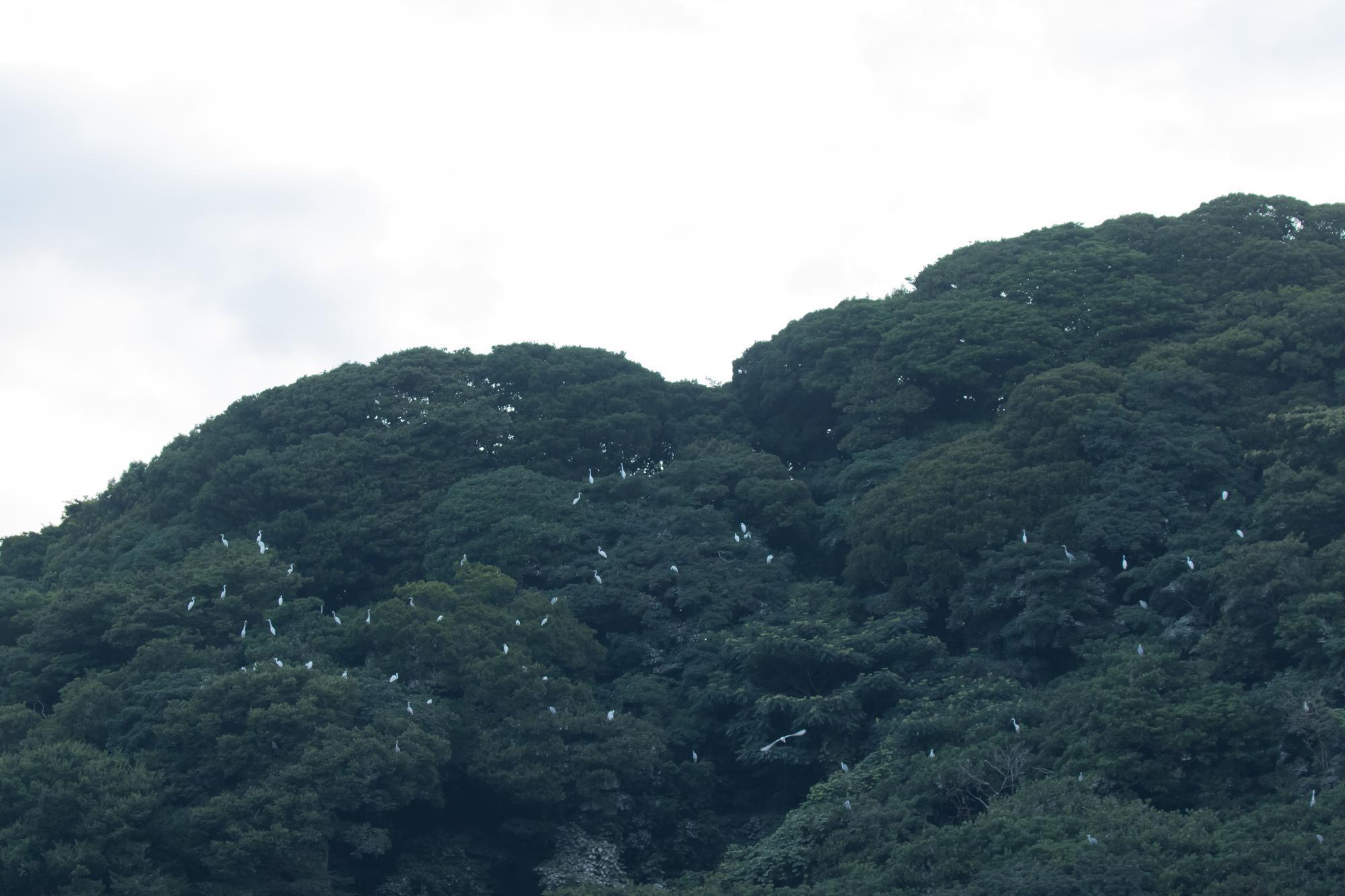 20170730-鷺山