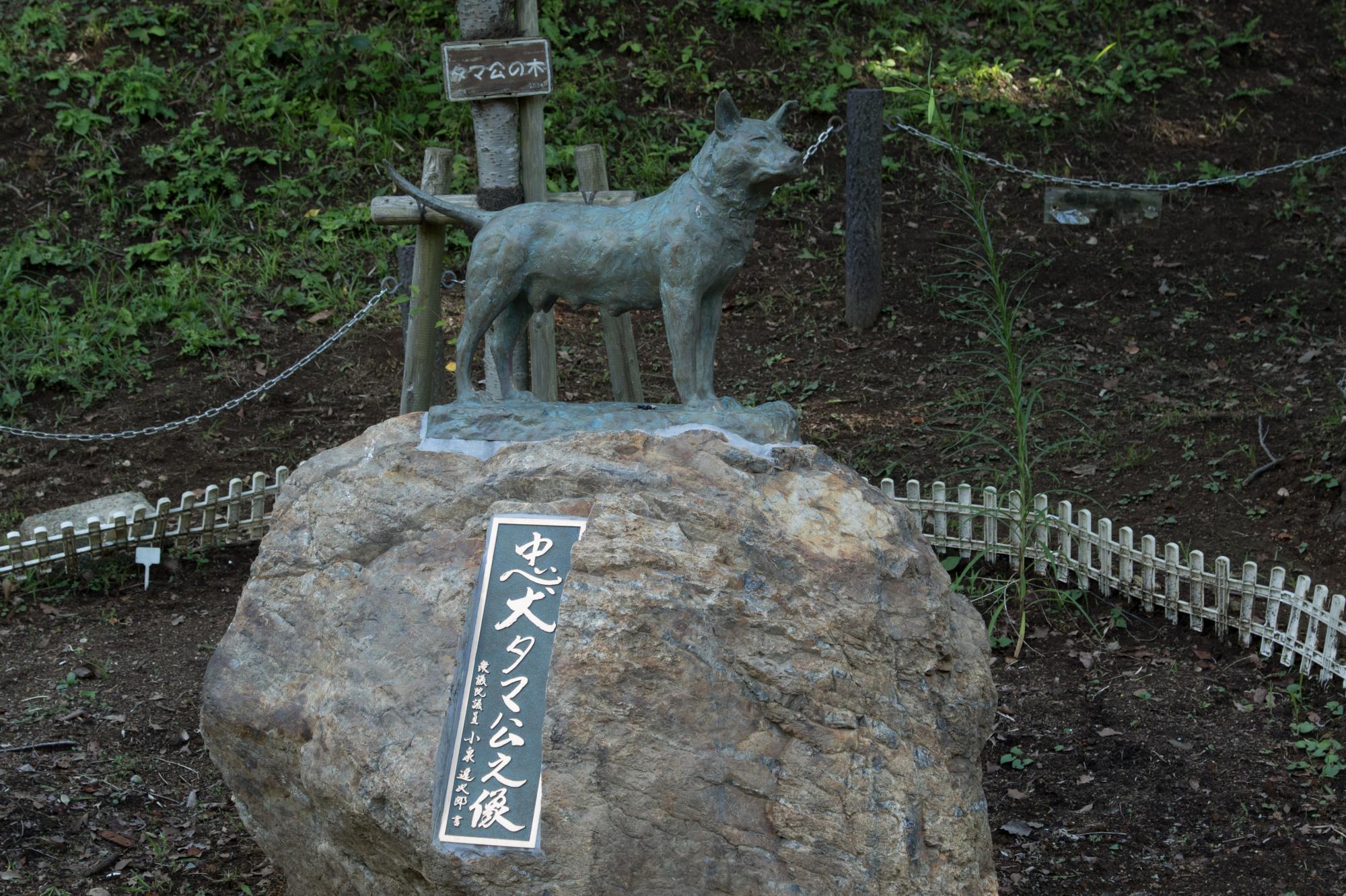 20170805-忠犬タマ公