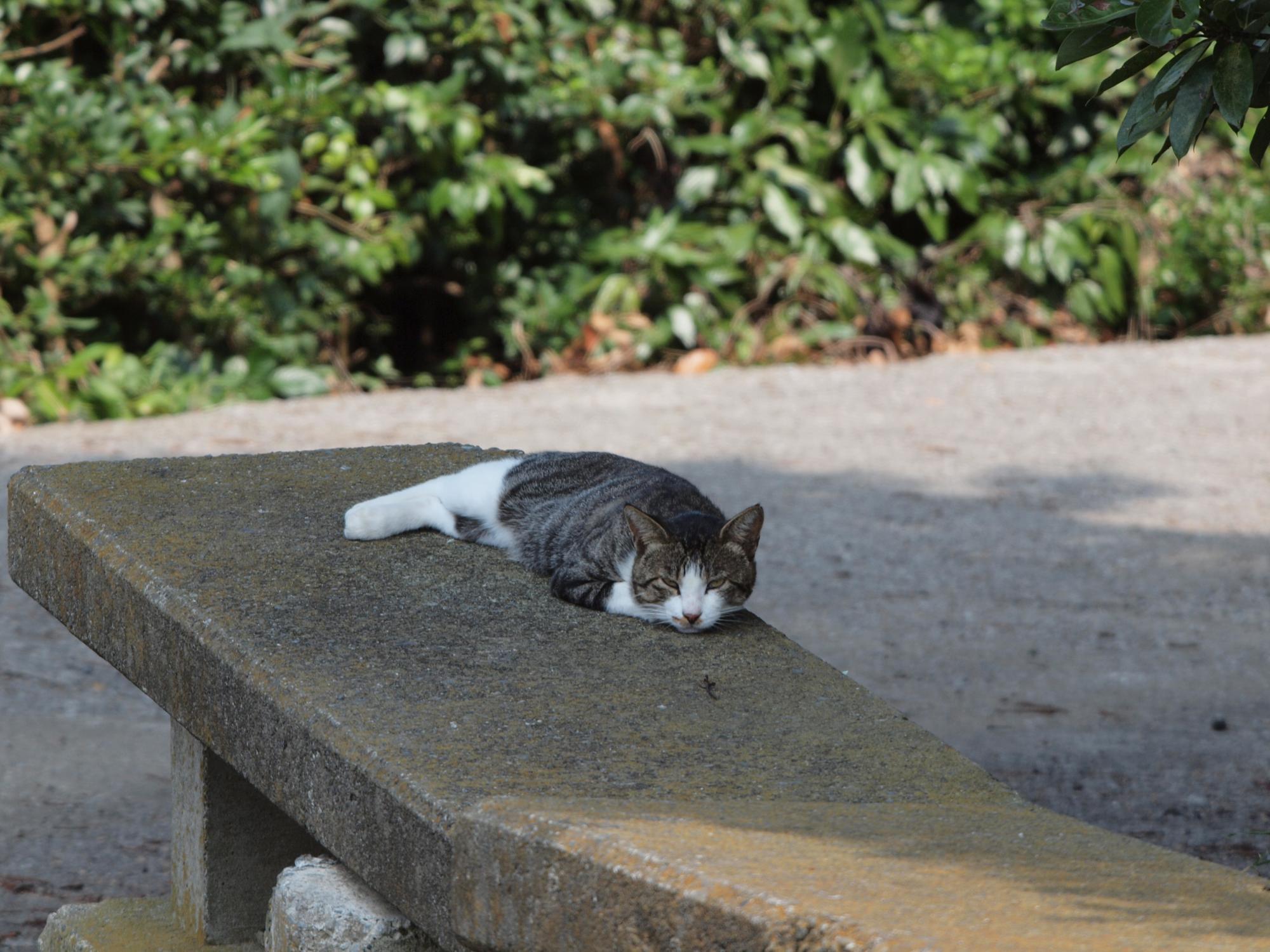 P8172974_猫