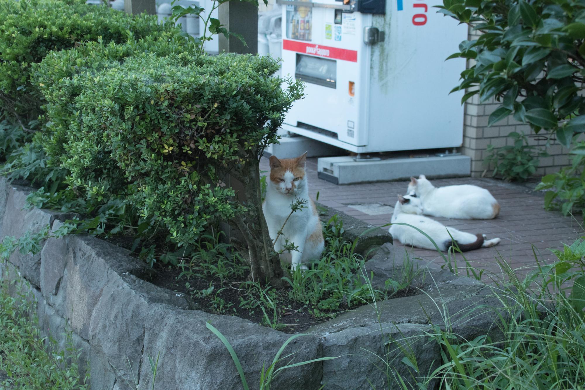 20170817-猫エリア3
