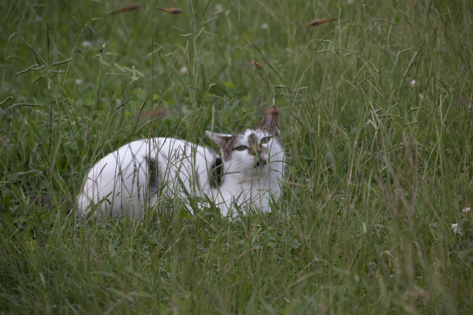 20170817-猫トンボ2