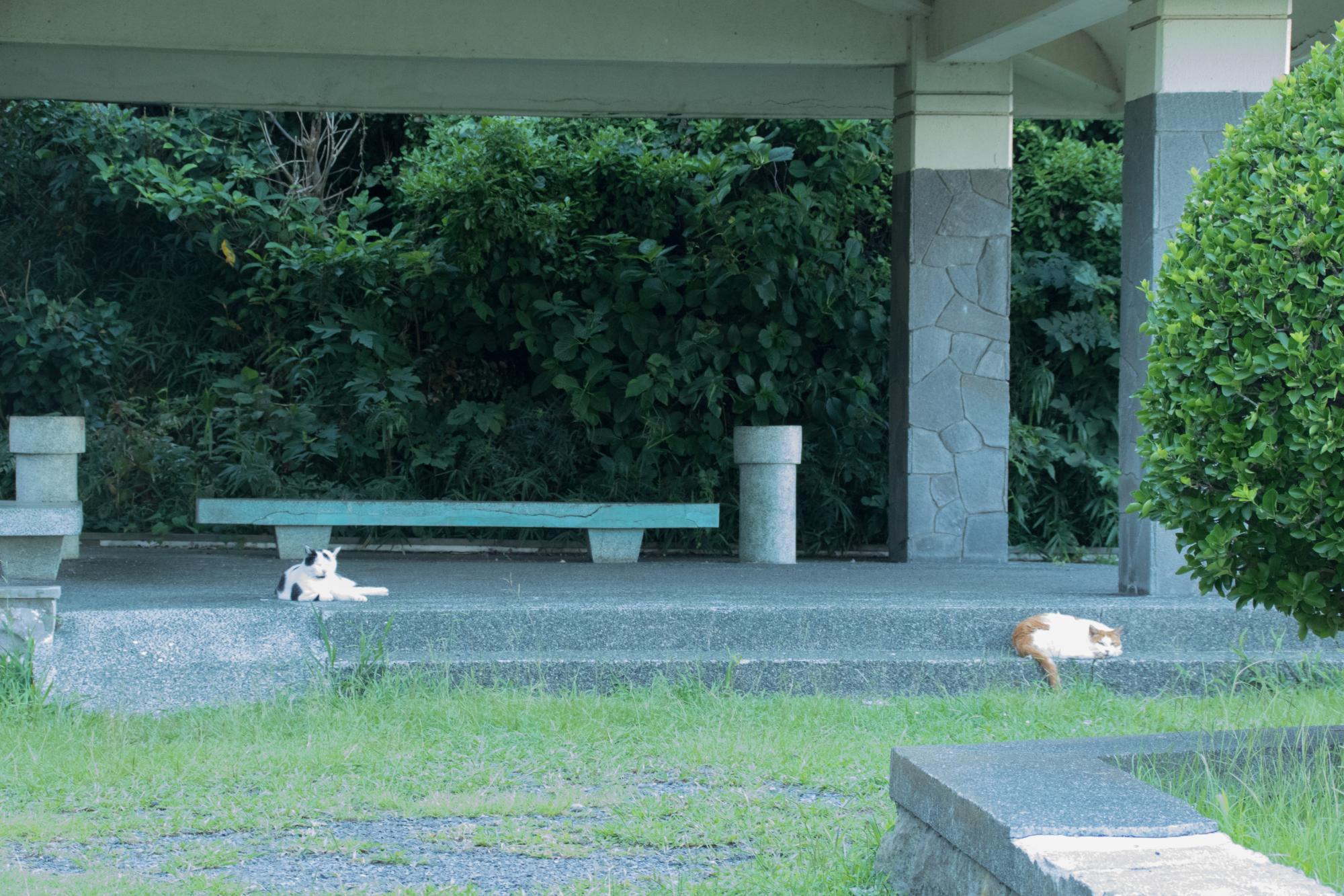 20170817-猫エリア1