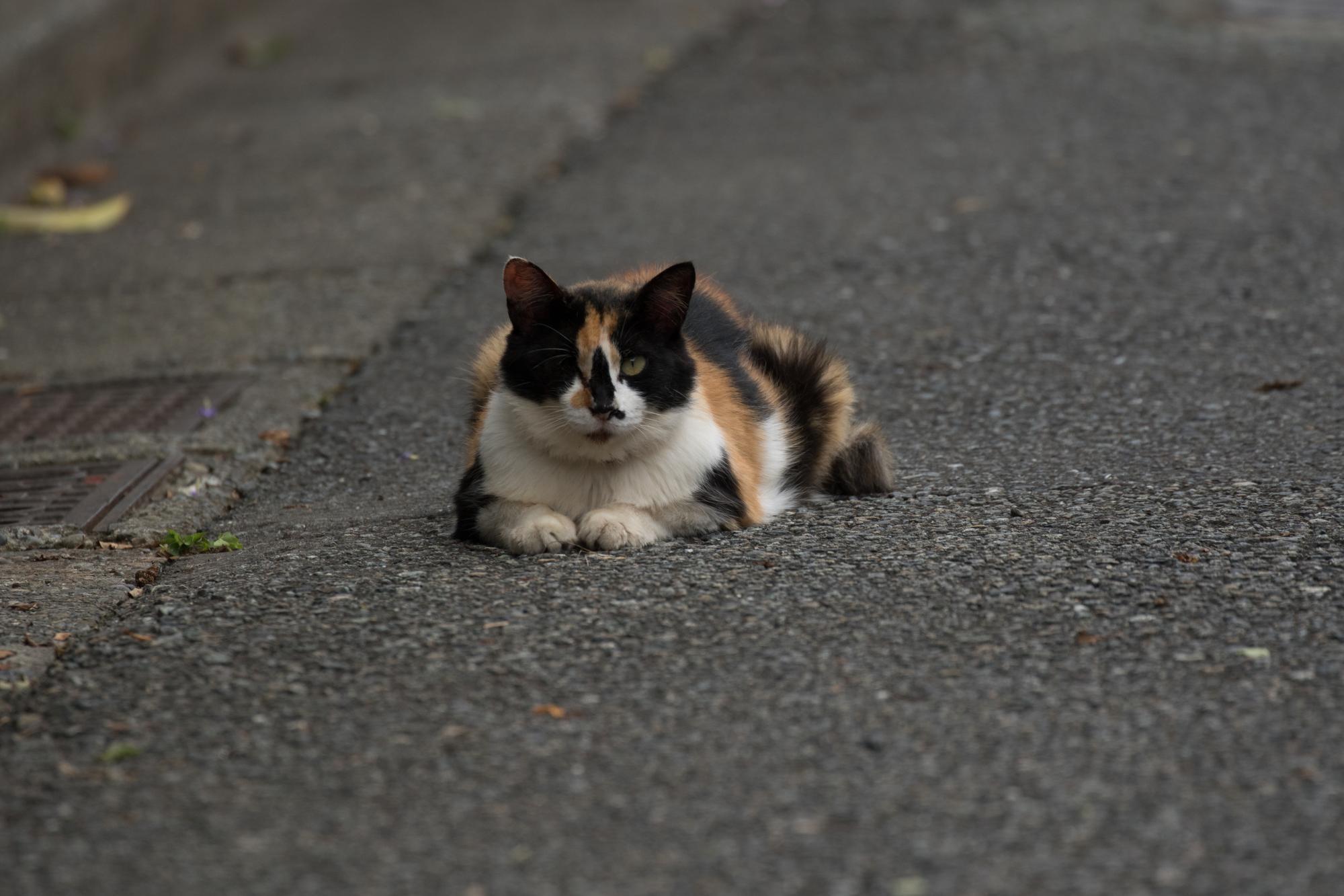 20170820-道端のネコ