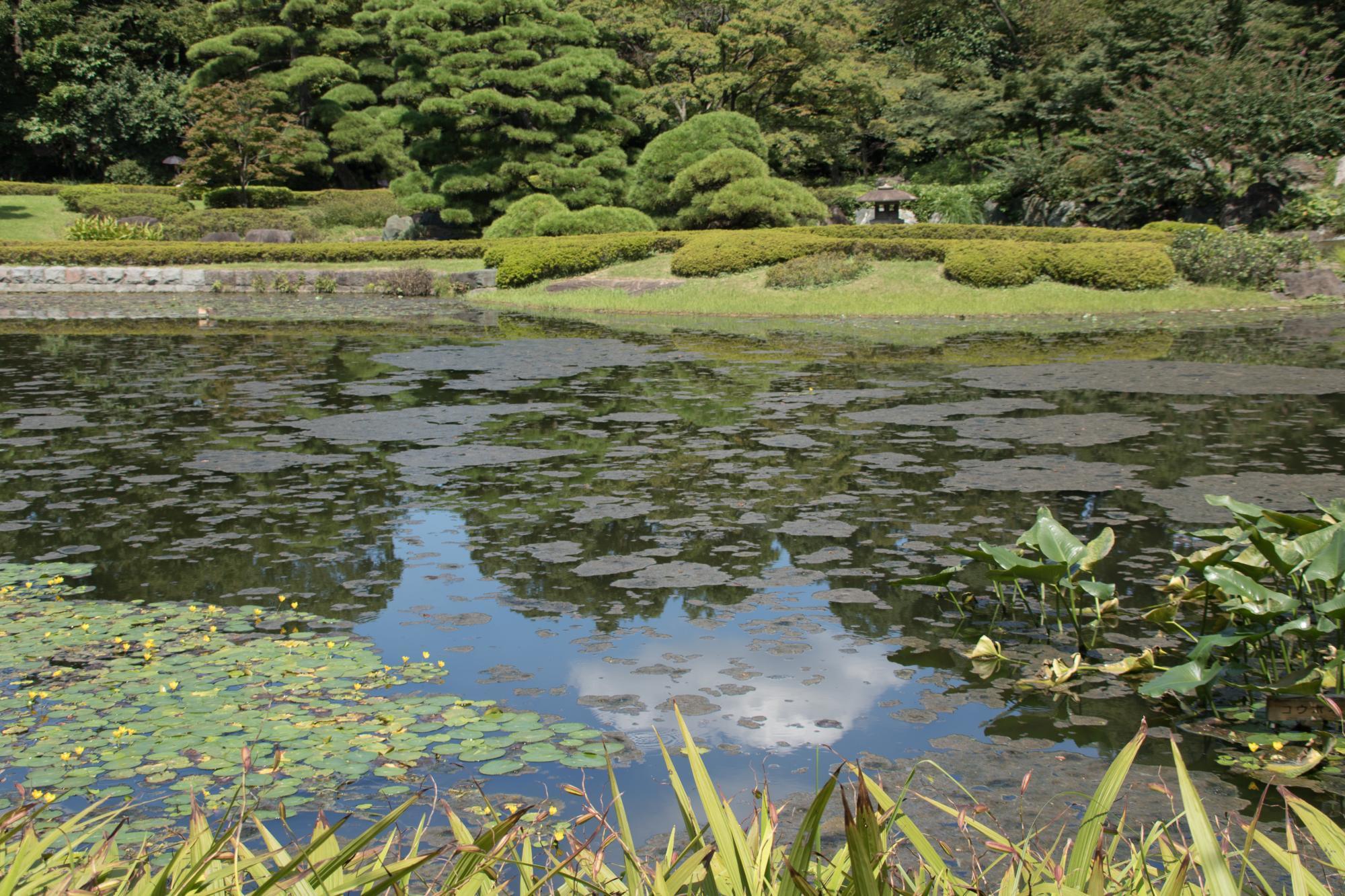 20170913-二の丸庭園池