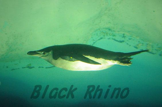 ヒゲペンギン3 名古屋港水族館