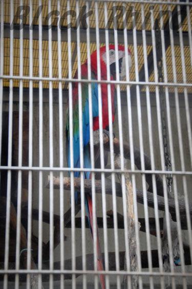 ベニコンゴウインコ 鞍ヶ池公園動物園