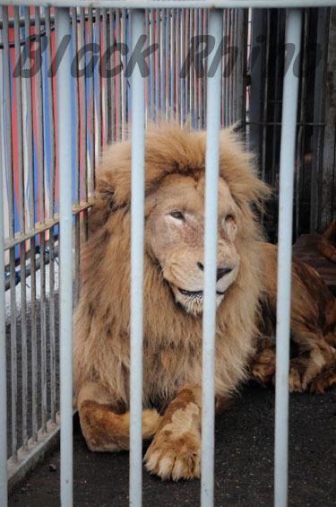 ホワイトライオン1 わくわくどうぶつえん