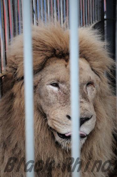 ホワイトライオン2 わくわくどうぶつえん