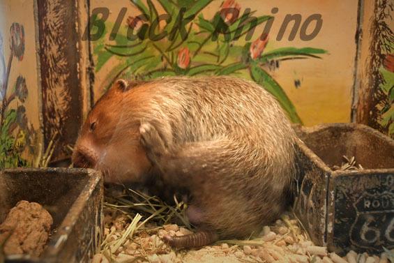 コタケネズミ3 めっちゃさわれる動物園