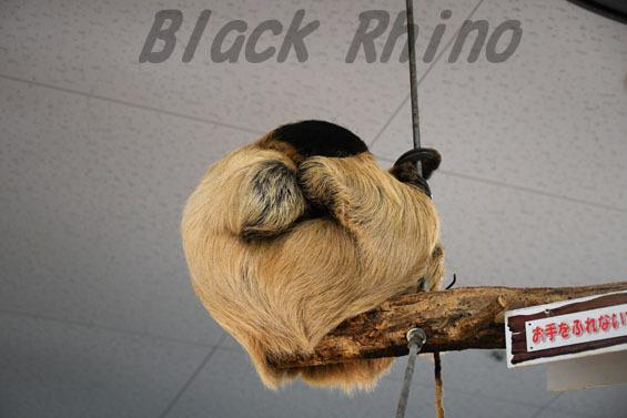 フタユビナマケモノ2 めっちゃさわれる動物園