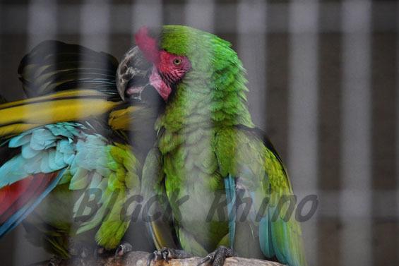ヒワコンゴウインコ ヨモギ 王子動物園