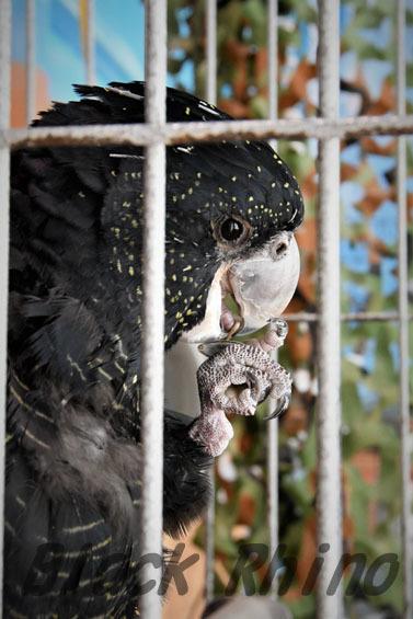 アカオクロオウム2 めっちゃさわれる動物園