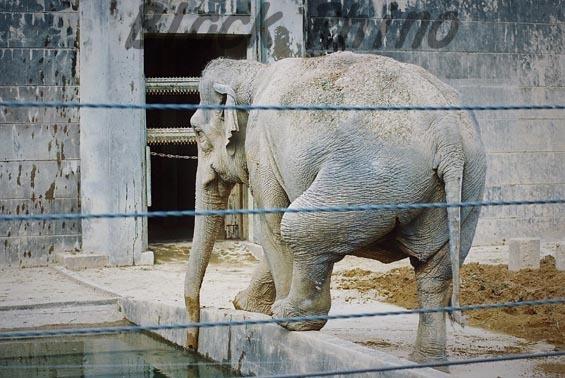 アジアゾウ シャンティ5 豊橋総合動植物公園