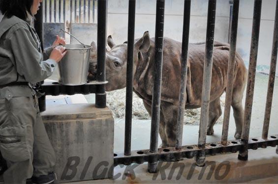 クロサイ フウカ2 金沢動物園