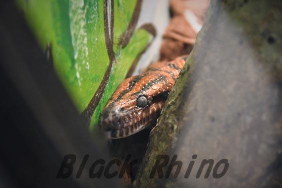 ブラジルレインボーボア1 めっちゃさわれる動物園