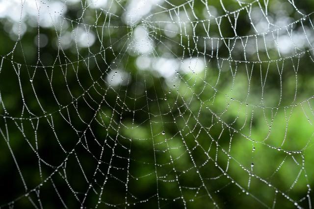 蜘蛛の巣(2)