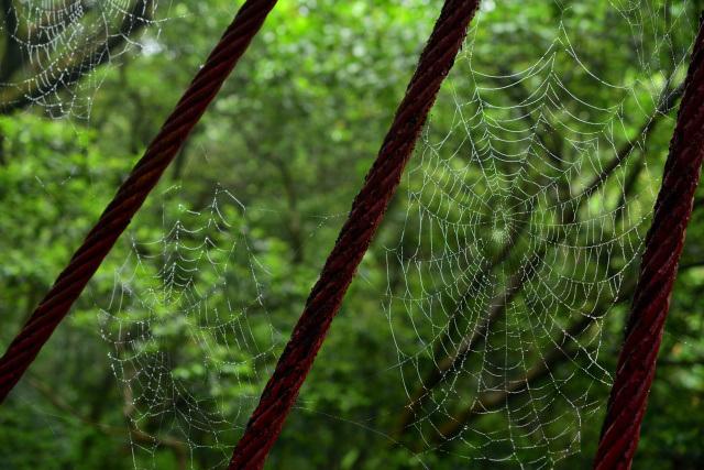 蜘蛛の巣(1)