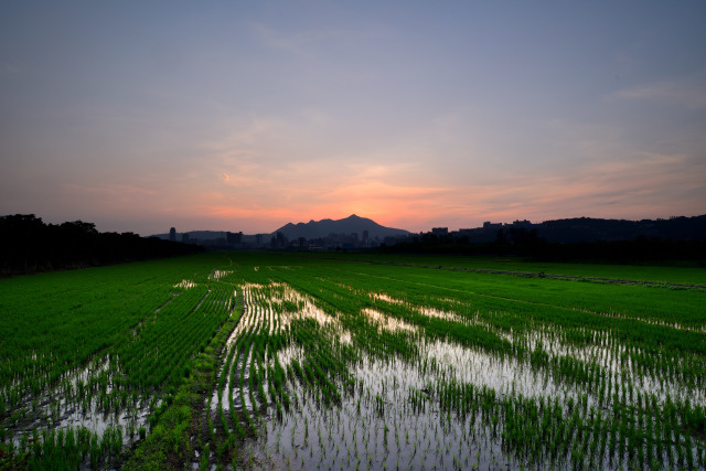 新緑と夕暮れ(3)