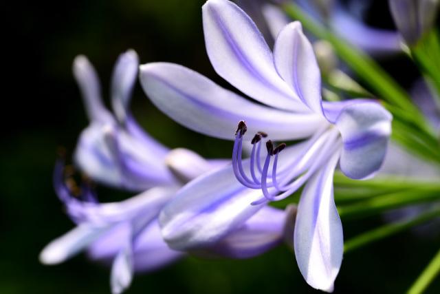 梅雨を告げる花(4)