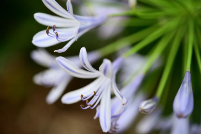 梅雨を告げる花(3)
