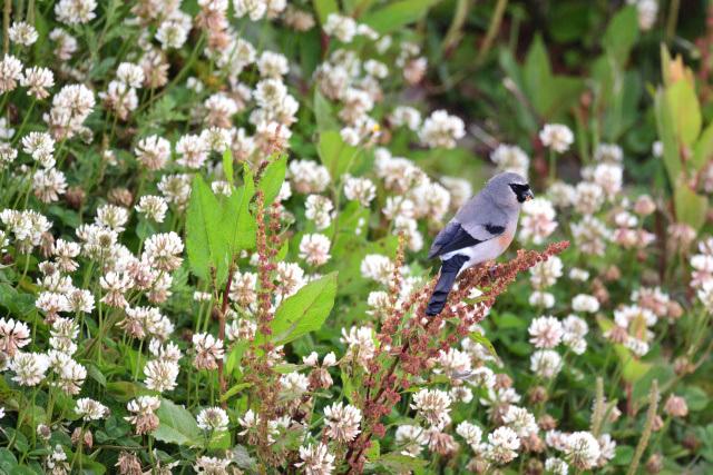 夏山の野鳥〜タカサゴウソ(2)