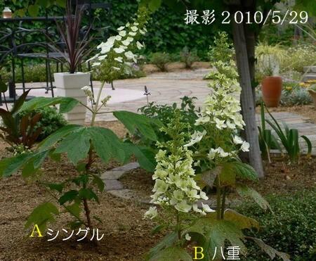 20110601kk2.jpg