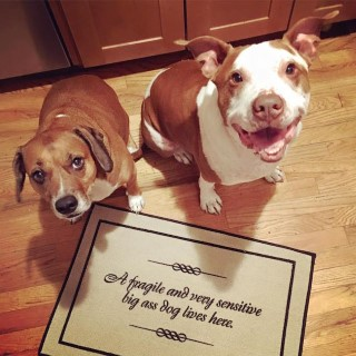 pit-bull-door-mat (Mobile)