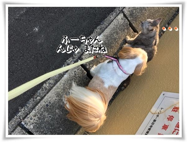 IMG_3142_1.jpg