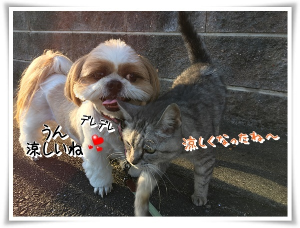 IMG_3151_1.jpg