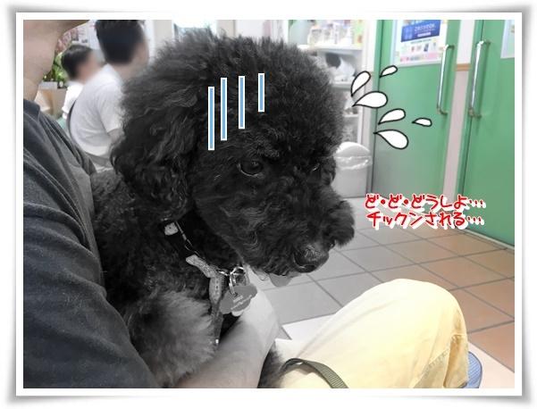 IMG_3167_1.jpg