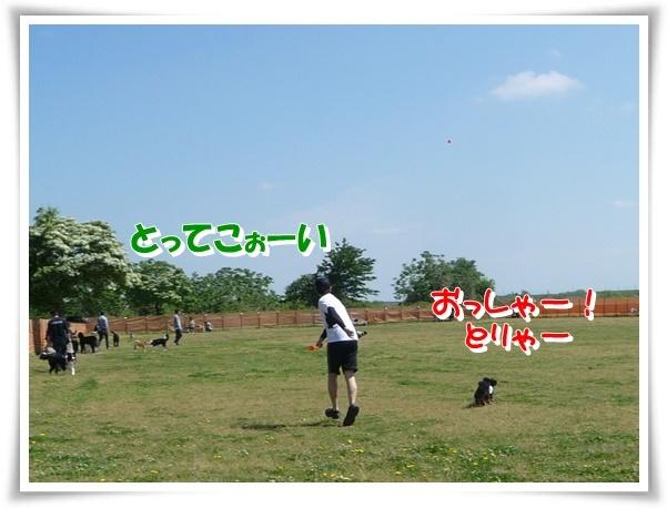 P1150099_1.jpg