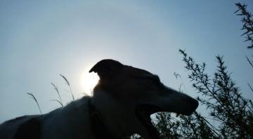 朝陽と小梅