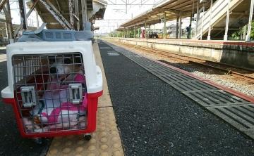 小野田駅 小梅