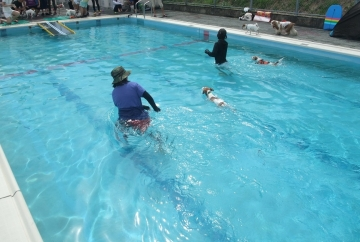 水泳選手犬