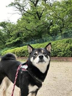 茶々・・・弥冨公園