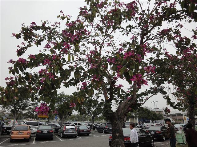DSC05783-2011台湾 (11)_R8