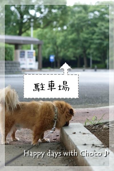 DSC_5490_201708020926488a0.jpg