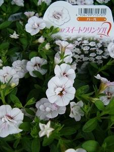 P1220116.jpg
