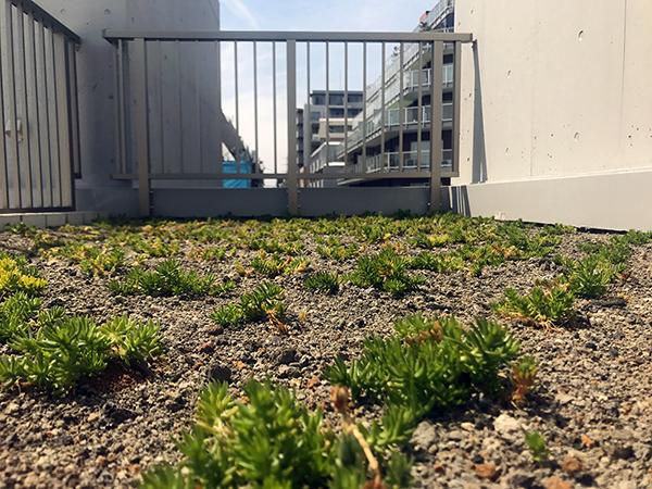 G_緑化植栽