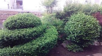 大宮の庭9