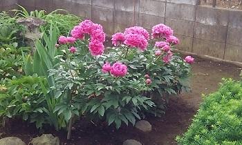 大宮の庭11