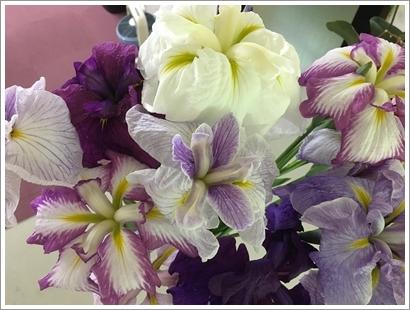 花しょうぶ_1