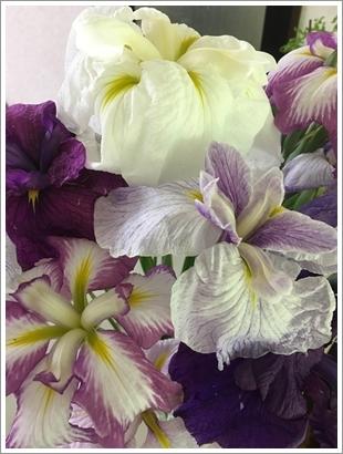 花しょうぶ_2