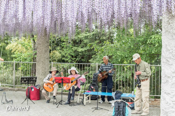 藤岡市フジの咲く丘