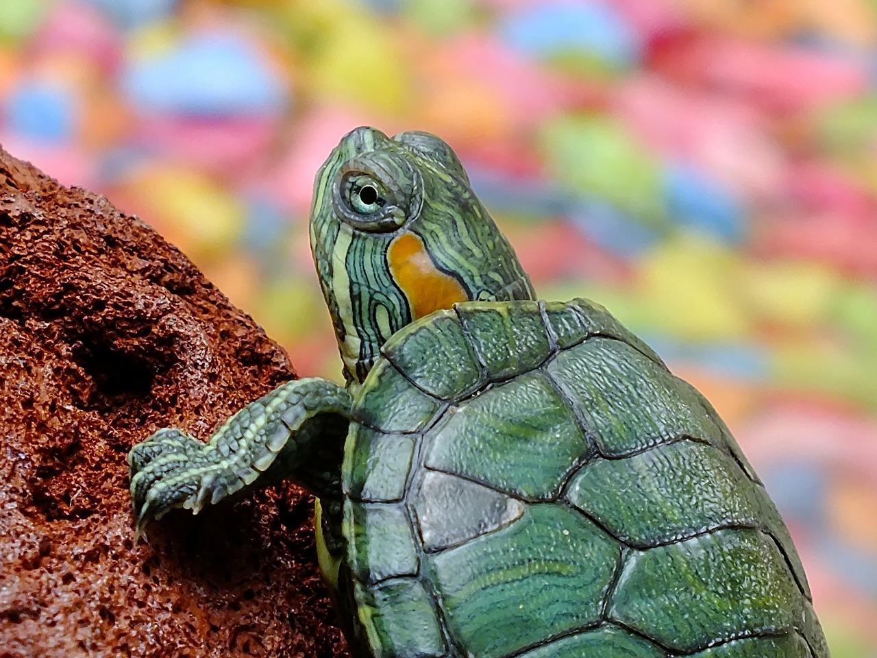 turtle-182121_1280.jpg