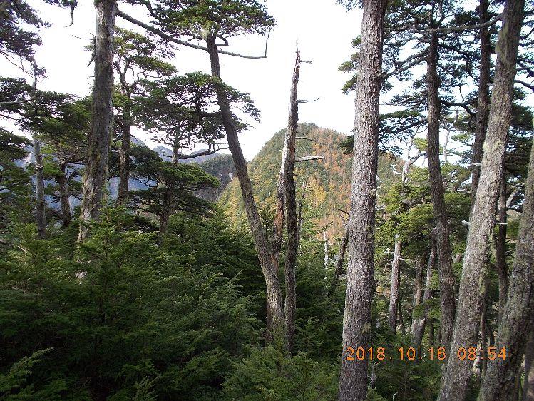 梢越しに大岩山への稜線