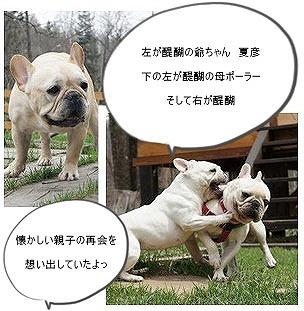 ♪夏彦ママ
