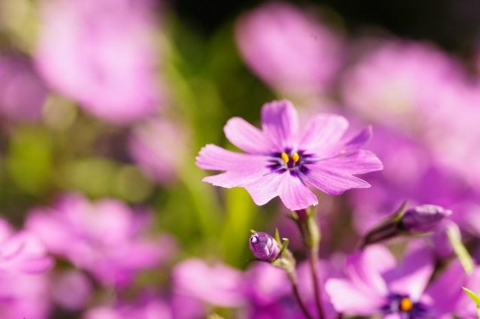 DSC06645紫色の